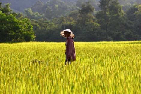 Sonrisas entre arrozales