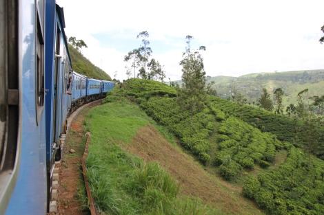 El tren recorre las plantaciones de té