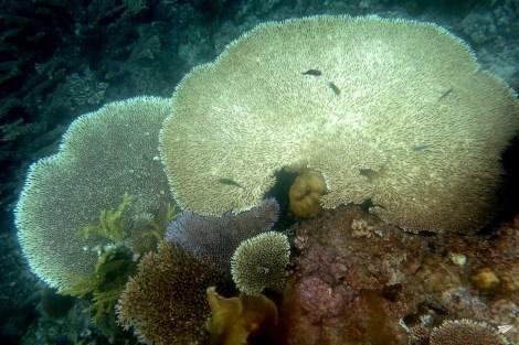 Coral Port Barton