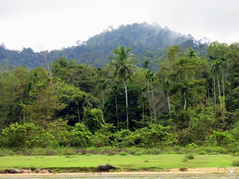 Taman Negara Malasia