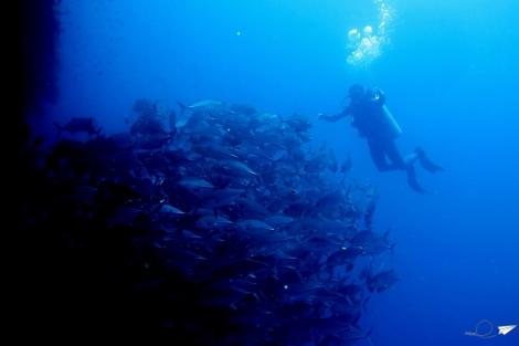 Banco de peces Balicasag